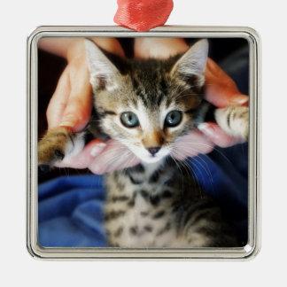 Ornamento De Metal Pendurando para fora o gato malhado