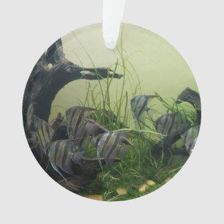 Ornamento do Angelfish de Orinoco