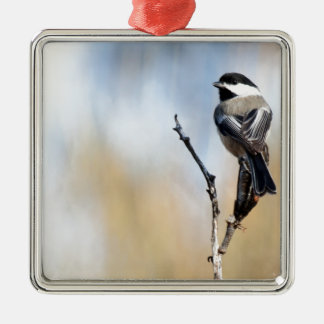 Ornamento Preto-Tampado do Chickadee