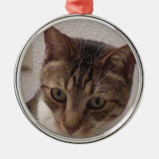 Ornamento redondo superior do gato de gato malhado