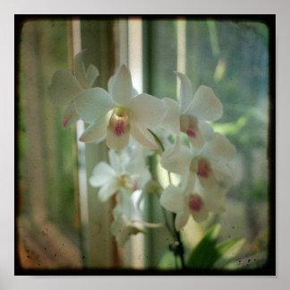 orquídea 8 x 8 fotografia original da natureza TTV Posteres