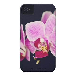 Orquídea cor-de-rosa fúcsia capas para iPhone 4 Case-Mate