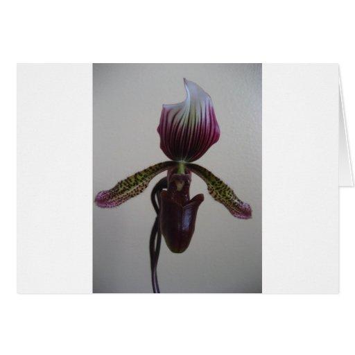 orquídea, deslizador de senhora cartoes