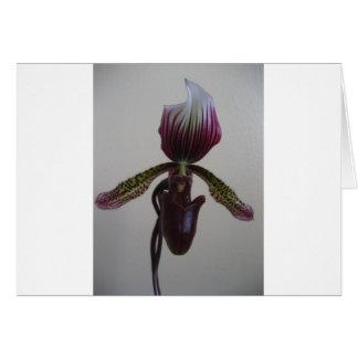 orquídea, deslizador de senhora cartão comemorativo