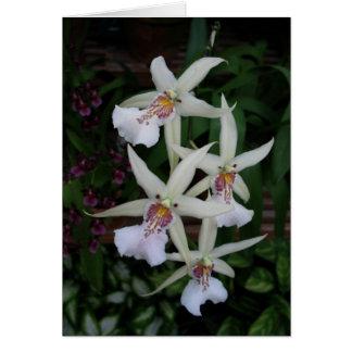 Orquídea Portuguesa-feliz do aniversário-four Cartão