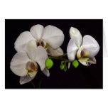 Orquídeas brancas cartao