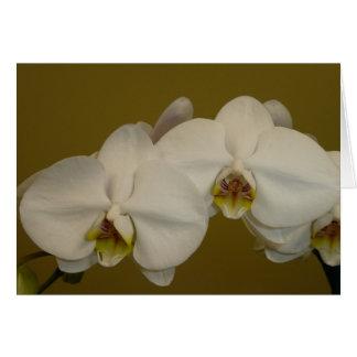 Orquídeas brancas cartão comemorativo