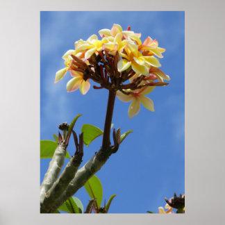 Orquídeas de Cattleya que crescem em uma árvore do Poster