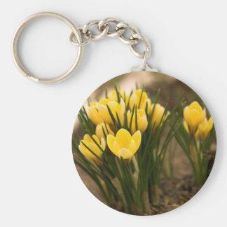 Os açafrões amarelos saltam primeiramente flor chaveiro