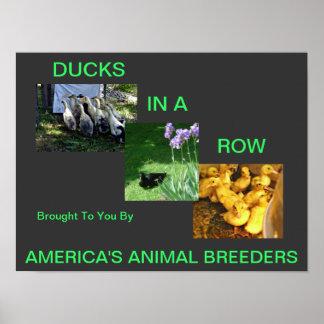 Os animais são o poster 5 da vida