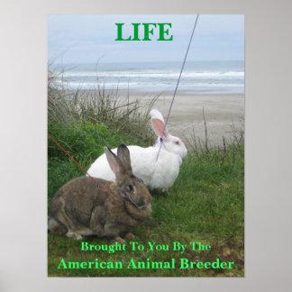 Os animais são poster da vida