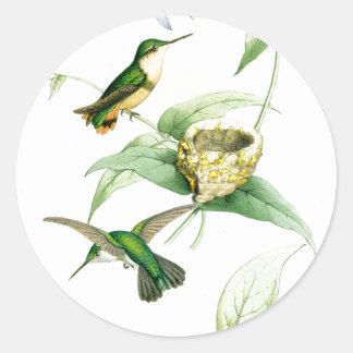Os animais selvagens dos pássaros do colibri adesivo