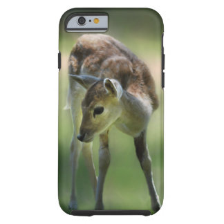 Os cervos são tão doces capa tough para iPhone 6
