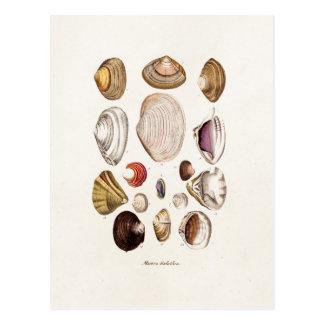 Os escudos do mar do vintage personalizaram cartão postal