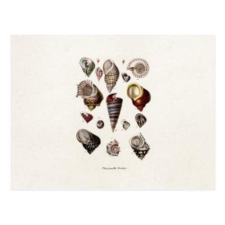 Os escudos do mar do vintage personalizaram o eixo cartão postal