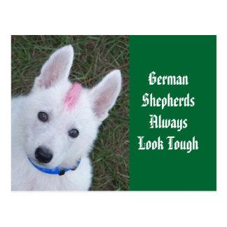Os german shepherd olham sempre resistentes cartão postal