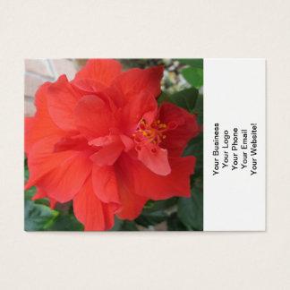 Os hibiscus plantam floral vermelho cartão de visitas