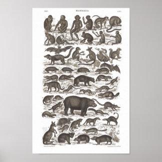 Os mamíferos do vintage imprimem a história poster