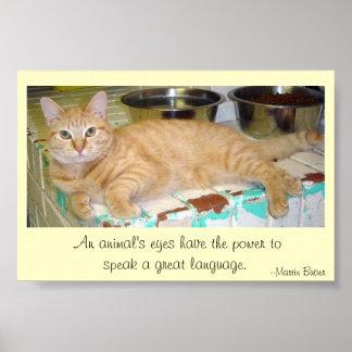 Os olhos dos animais falam uma grande língua pôster
