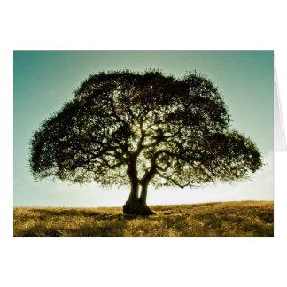 Os pêsames cardam com árvore cartão comemorativo