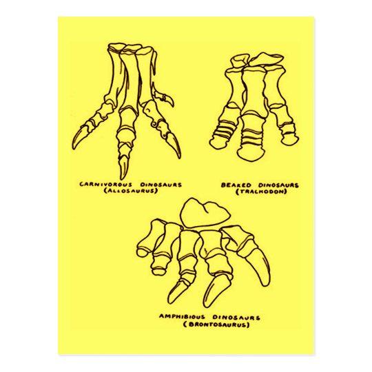 Ossos de pé do dinossauro cartão postal