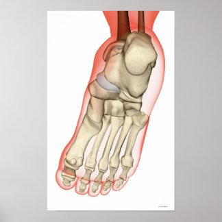 Ossos do pé 12 poster