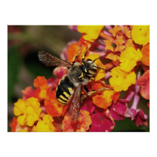Outono do inseto poster