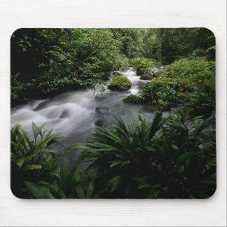 Paisagem Amazon do rio do córrego da selva Mouse Pad