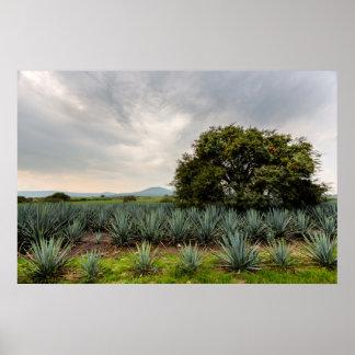 Paisagem com agave azul poster