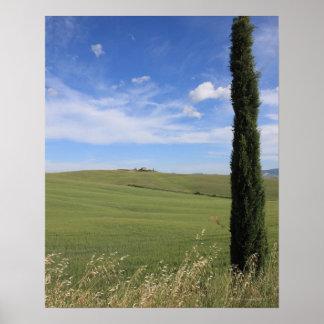 Paisagem com Cypress Poster