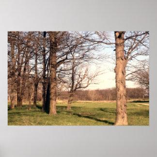 Paisagem da árvore posteres