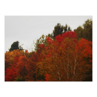 Paisagem da cena das árvores do Adirondacks do cam Posters