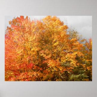 Paisagem da cena das árvores do Adirondacks do out Poster