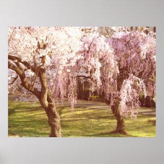 Paisagem da flor de cerejeira poster