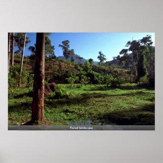 Paisagem da floresta impressão