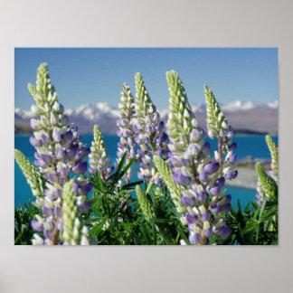Paisagem de florescência de Nova Zelândia do Poster