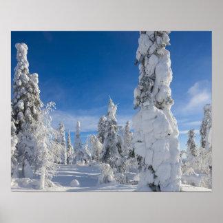Paisagem do inverno em Lappland Poster