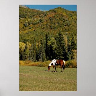 Paisagem do outono com cavalo poster