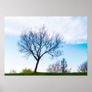 Paisagem do primavera natural póster