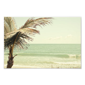 Palma de coco e fotografia Pastel da praia