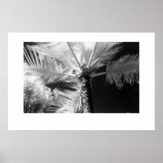 Palmeira havaiana poster