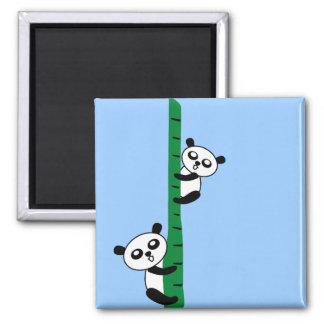 Pandas bonitos ímã quadrado