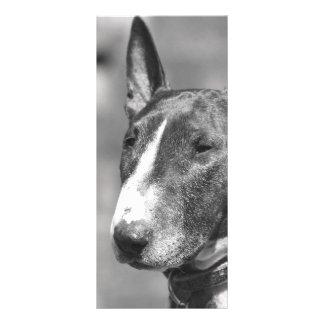 Panfleto Cão de bull terrier