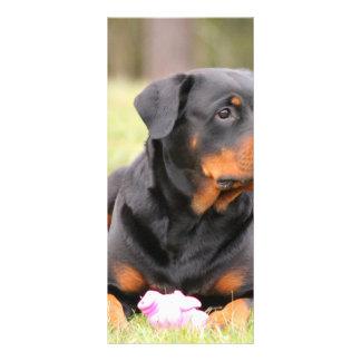Panfleto Rottweiler bonito grande