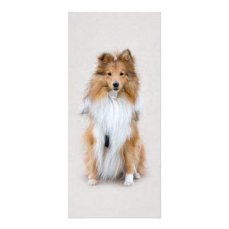 Panfleto Sheepdog de Shetland, marcador do costume do cão