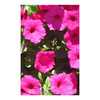 Pansies cor-de-rosa de estalo papelaria