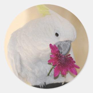Papagaio ama-me ou não adesivo
