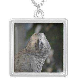 Papagaio do cinza africano de Congo Colar Banhado A Prata