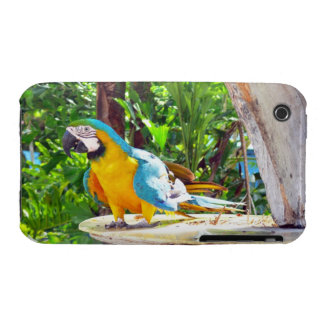 Papagaio do Macaw do azul e do ouro Capa Para iPhone 3