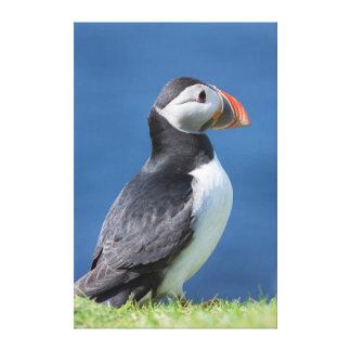 Papagaio-do-mar atlântico (Fratercula Arctica) no Impressão De Canvas Esticada